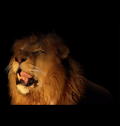 lion on black vector image