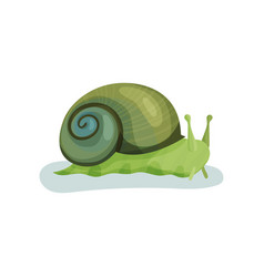 green snail gastropod mollusk with green shell vector image