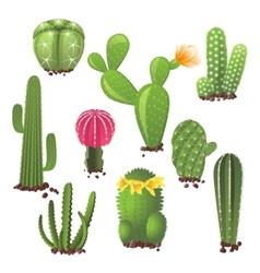 Different types of cactuses vector image vector image