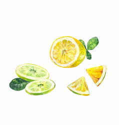 Cut slices of lemon bergamot or lime on a white vector