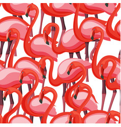 exotic pink flamingo wading birds flamboyance vector image