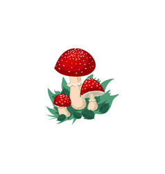 Red fly agaric mushrooms in vector