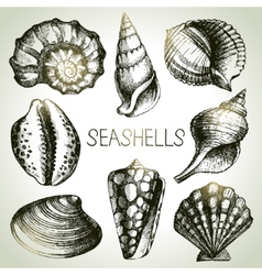 Seashells hand drawn set Sketch design elements vector image