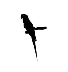 Sweet parrot silhouette isolated on white vector