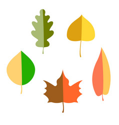 set of autumn leaves flat vector image