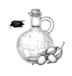 Bottle of olive oil and olive branch hand vector