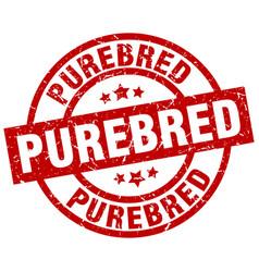 purebred round red grunge stamp vector image