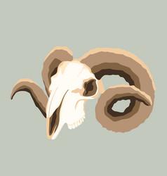 ram skull flat style vector image