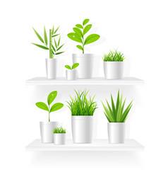 realistic detailed 3d house plant pot shelves set vector image
