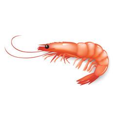 Realistic shrimp icon ion white fresh sea food vector