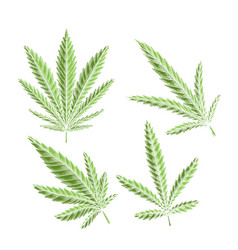 set green different leaves marijuana with vector image