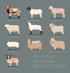 Set of flat polygonal breeds of sheep icons vector