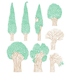 set old deciduous trees on a white background vector image