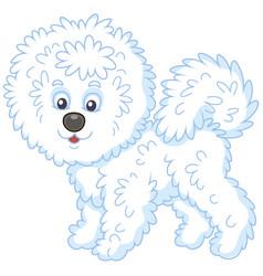 Shaggy bichon frise dog vector