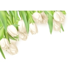 Tulips decorative background EPS 10 vector