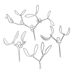 set of four branch of hand drawn mistletoe in vector image vector image