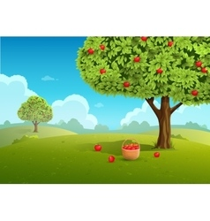 Apple orchard vector image