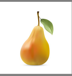 realistic of pear with leaf vector image