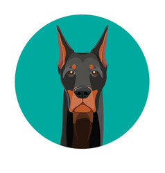Snout of noble doberman with dark smooth fur vector