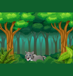 The wolf walking in way of forest hills vector