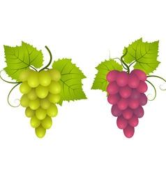 grape vector image