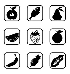 fruit icons on white background vector image