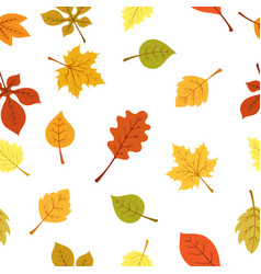 autumn yellow leaves pattern vector image