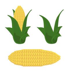 Corn icon organic product set vector
