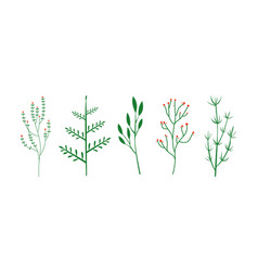 Culinary herbs set botanical elements vector