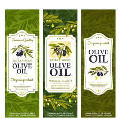 extra virgin olive oil product bottle package vector image