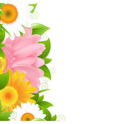 Flower Gerbers And Leaves vector image