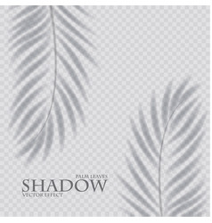 palm leaf shadow transparent effect exotic design vector image