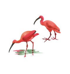 watercolor two flamingo hand painted pink bird vector image