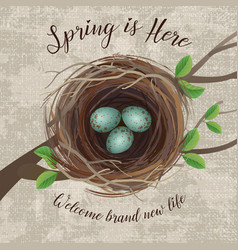 birds nest with blue speckled eggs vector image
