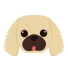 cute dog face vector image