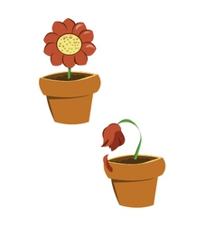 Pots of flowers vector