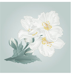 Twig jasmine flowers and buds vector