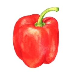 Watercolor sweet pepper vector