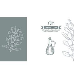 olive branches and bottle banner template and vector image