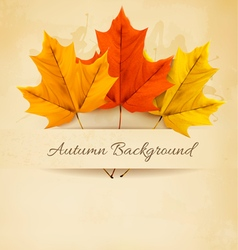 Autumn background with three colorful leaves vector image