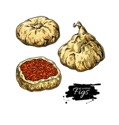 Dried fig drawing hand drawn dehydrated vector