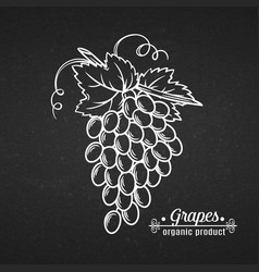 Hand draw line icon grape vector