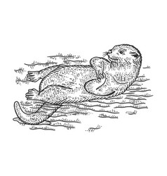 Otter is swimming on its back sketch vector
