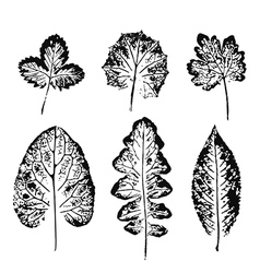 Set of Leaf imprints vector image