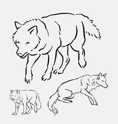 Wolf wild animal hand drawing vector