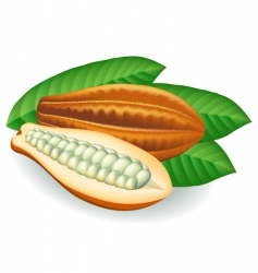 cocoa beans vector illustration vector image