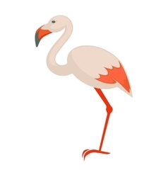 Pink flamingo Exotic bird isolated vector