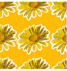chamomile flower seamless background vector image vector image