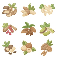 set of nuts vector image