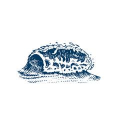 atlantic tidal waves vintage old engraved hand vector image